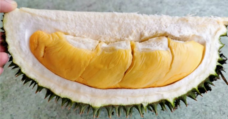 101-4 Durian