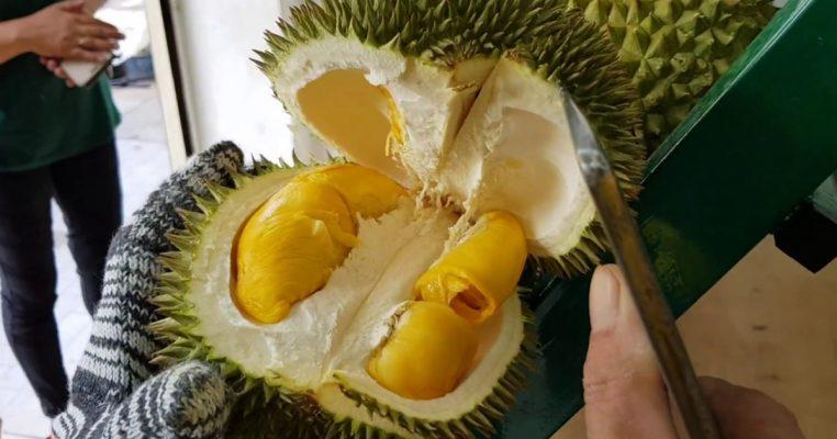 D-101-Durian (2)