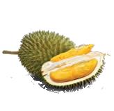 D101 Durian Fresh