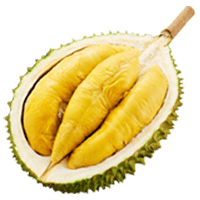 Fresh D 24 Durian Icon-min