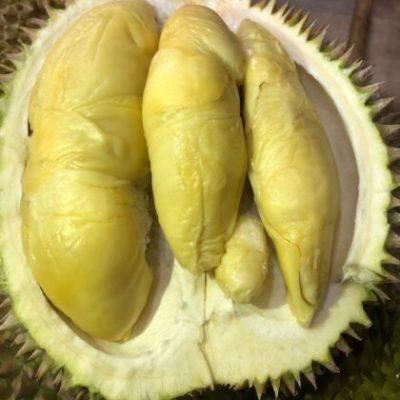 Gold Phoenix Direct Durian 4 (1)