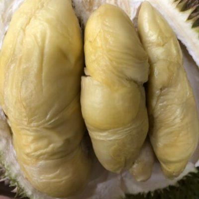 Gold Phoenix Direct Durian 4 (2)