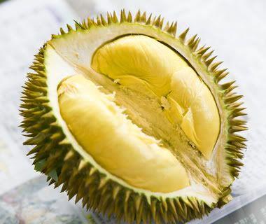 golden-phoenix-durian (1)