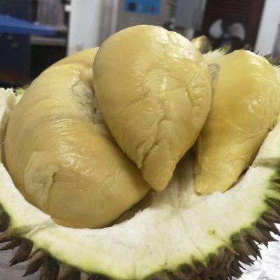 Xo Direct Durian